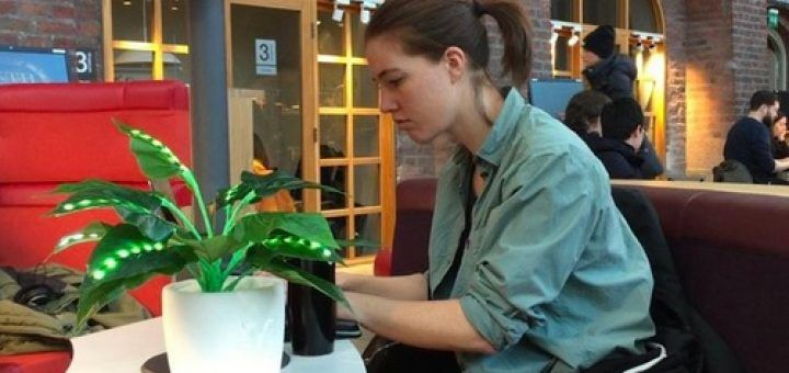 plantas interactivas 720x340 - Alone together, unas plantas interactivas para hacerte compañía