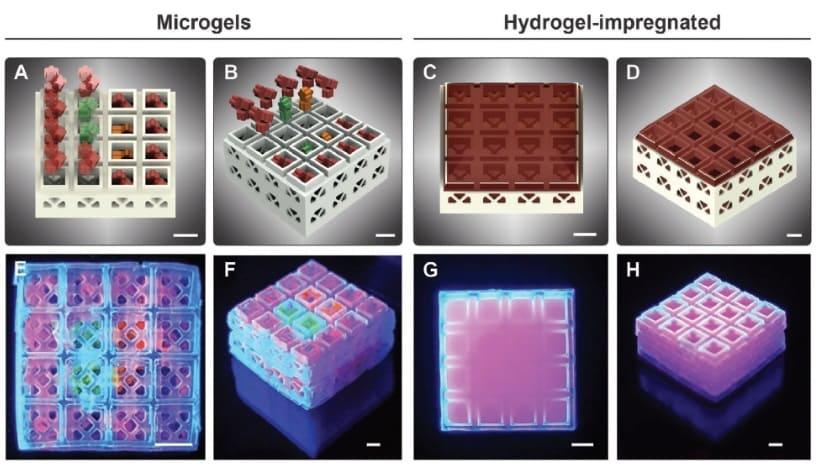 tipos de cubos del tamaño de una moneda - Inspirados por Lego, estos cubos impresos en 3D ayudan en la regeneración ósea.