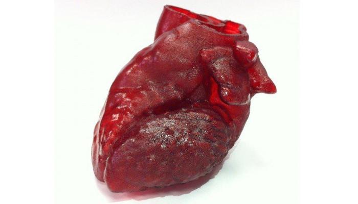 3d printed organs heart replica - Bioimpresión en 3D, 6 órganos y proyectos impresos en 3D