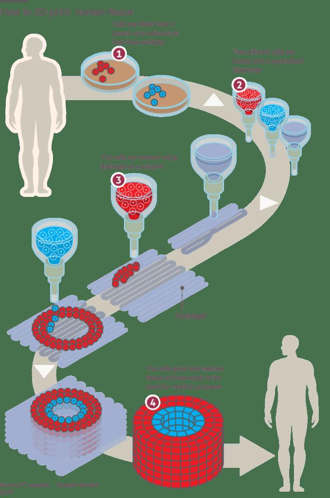 3d printed organs process - Bioimpresión en 3D, 6 órganos y proyectos impresos en 3D