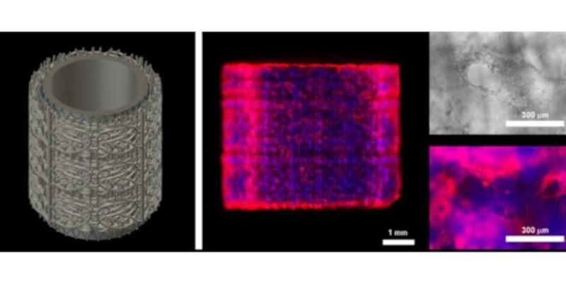 prellis biologicos capilares bioimpresos 3d - Bioimpresión en 3D, 6 órganos y proyectos impresos en 3D