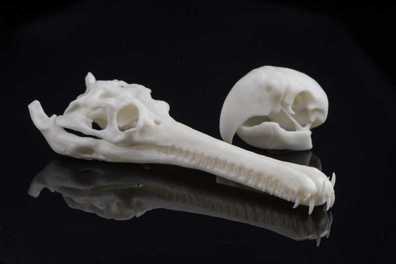 bones printed in somos resin - ¿Cuánto cuesta imprimir en 3D? La pregunta del Millón