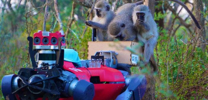 robots y animales 704x340 - ANYmal conoce a los monos en la naturaleza de Sudáfrica